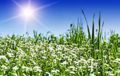 Green meadow and sun — Stock Photo