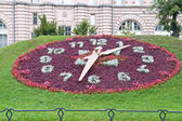 Floral clock — Stock Photo