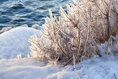 Ice on the branches — Stock Photo