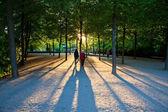 Sanssouci, park, 's avonds — Stockfoto