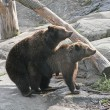 Stock Photo: Brown bears. Spring. Instinct