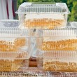Honey honeycomb — Stock Photo