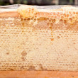 Stock Photo: Honey honeycomb