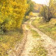 Road in the autumn forest. HDR — Stock Photo