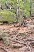 "State Nature Reserve ""Stolb"" (Pillars) — Stock Photo"