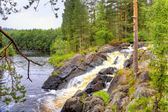 Little waterfall on the forest small river in Karelia — Stockfoto
