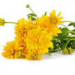Flower Golden Ball or Rudbeckia — Stock Photo #51078247