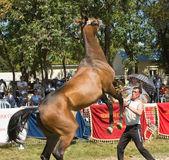 Naughty horse. — Stock Photo