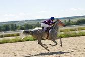 Paardenrennen. — Stockfoto
