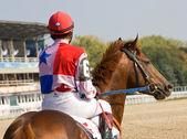 Beforee horse race — Stockfoto