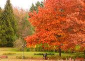 Podzimní park — Stock fotografie