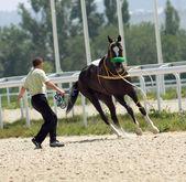 Unruly horse — Stock Photo