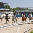 Horse racing in Pyatigorsk. — Stock Photo #26156109
