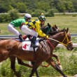 Horse racing in Pyatigorsk. — Stock Photo #26383363