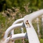 Bird — Stock Photo #27816045