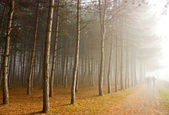 Autumn forest in Pyatigorsk. — Stock Photo