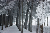 Winter park — Stockfoto