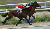 Paardenrennen — Stockfoto