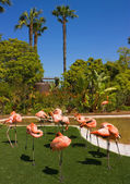 Flamingo ave — Foto de Stock