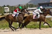 Horse race start.  — Stock Photo