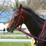 Portrait of horse. — Stock Photo #5597062