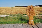 Sheaf of yellow spices in russian rural farm — 图库照片
