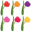 Tulips on a white background. Vector. - Stock Vector