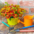Bouquet of red flowers (Helenium), garden tools and watering can — Stock Photo #28853491