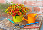 Bouquet of red flowers (Helenium), garden tools and watering can — Stock Photo