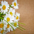 Camomile on the canvas background. Basis for design label cosmet — Stock Photo #38960257