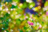 Multicolour bokeh, abstraktnіy bright background — Stock Photo