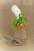 Hyacinth and garden tools on a canvas background. Still rustic. — Foto de Stock