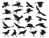 Moving silhouettes of crows on a white background. Set of vector — Vector de stock