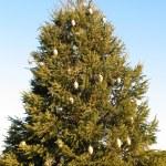Christmas tree — Stock Photo #11971919