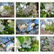 Set of blossom backgrounds — Stock Photo