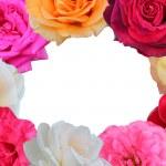 Roses frame — Stock Photo #27089409