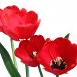 Red tulips — Stock Photo #27089453