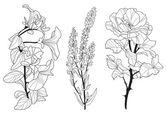 Zestaw ozdobny kwiaty — Wektor stockowy