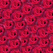Red roses background — Stock Photo #29243187