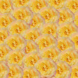 Yellow roses background — Stock Photo