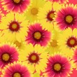 Gaillardia flowers background — Stock Photo