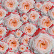 Stock Photo: Rose flowers background