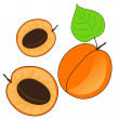 Apricot fruits — Stock Vector