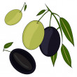 Stock Vector: Olive branch