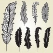 Stock Vector: Decorative feathers set