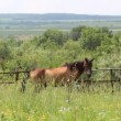 Stock Video: Brown horse