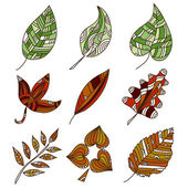 Set of 9 leaves — Stock Vector