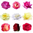 Set of 9 roses — Stock Vector