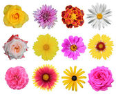 Set of 12 different flowers — Stock fotografie
