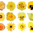 Yellow flowers — Stock Photo #45319251